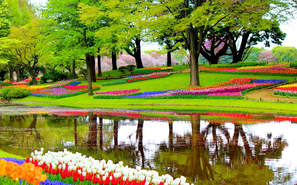 garden-of-europe-in-lisse-netherlands