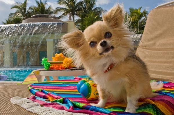 dog-on-vacation-at-hotel_fwifdd