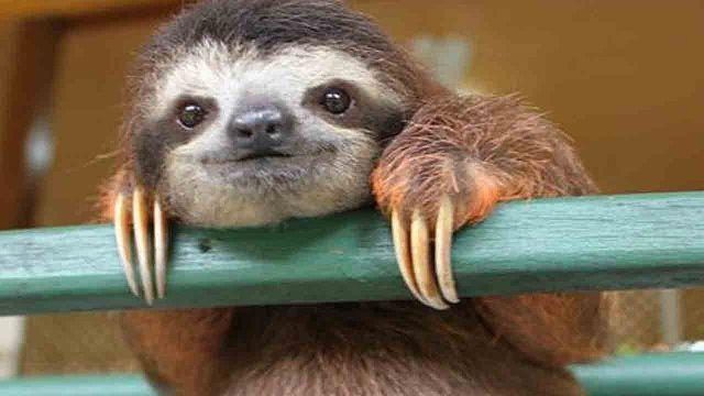 Cute_Sloth